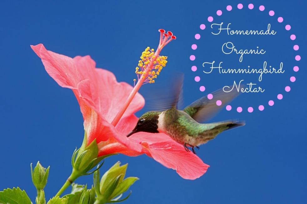 Organic Hummingbird Nectar
